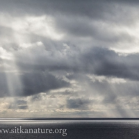 Showers over the Gulf