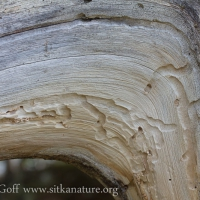Wood Borer Tracks
