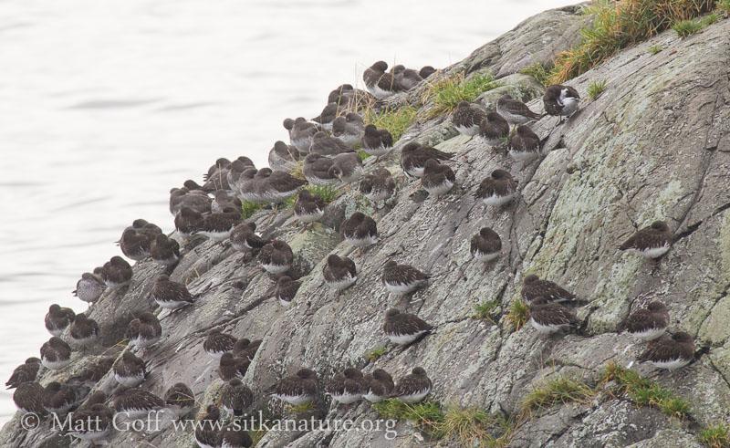 Shorebirds on Sage Beach