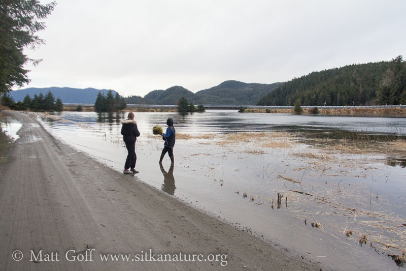Nelson Logging Road at High Tide