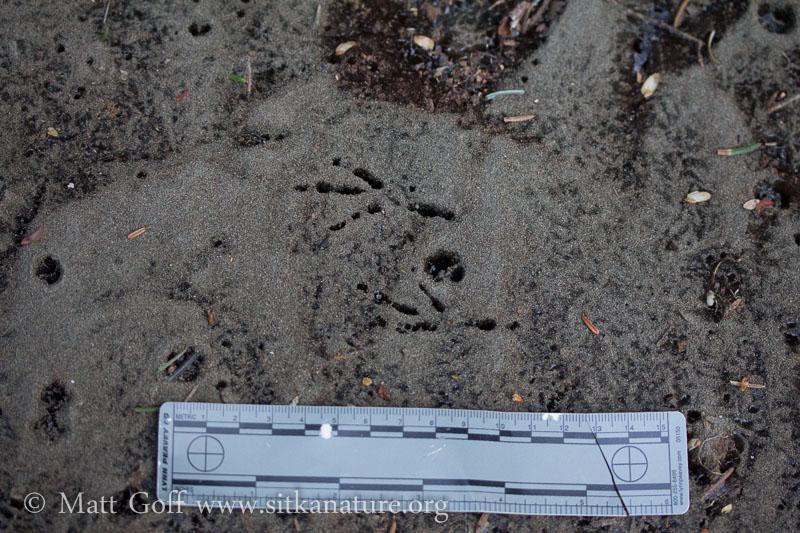 Bird Tracks