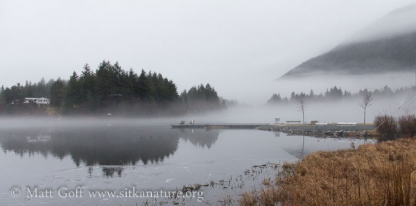 Ice and Fog on Swan Lake