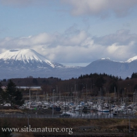 Mt. Edgecumbe from O'Connell Bridge