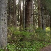 Totem Park Forest