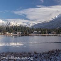 Swan Lake View