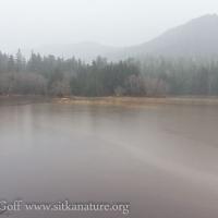 Flooded Estuary