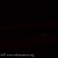 Bioluminescent Firewood