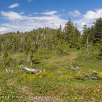 Harbor Mountain Subalpine