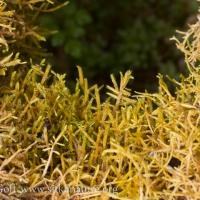Epiphytic Moss