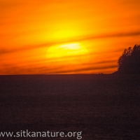 Whale Park Sunset