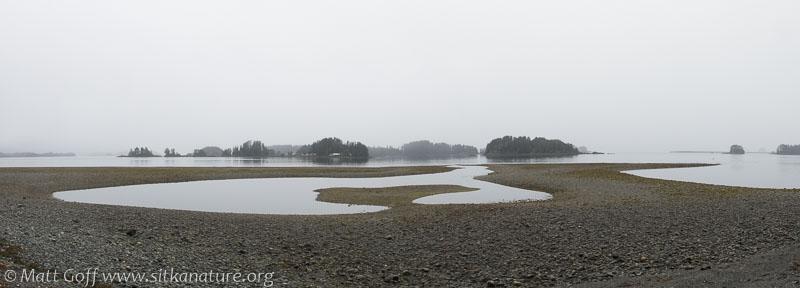 Tide Flats View