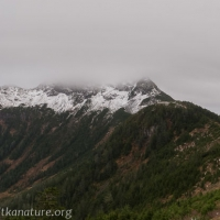 Harbor Mountain