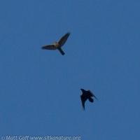 Raven and Goshawk