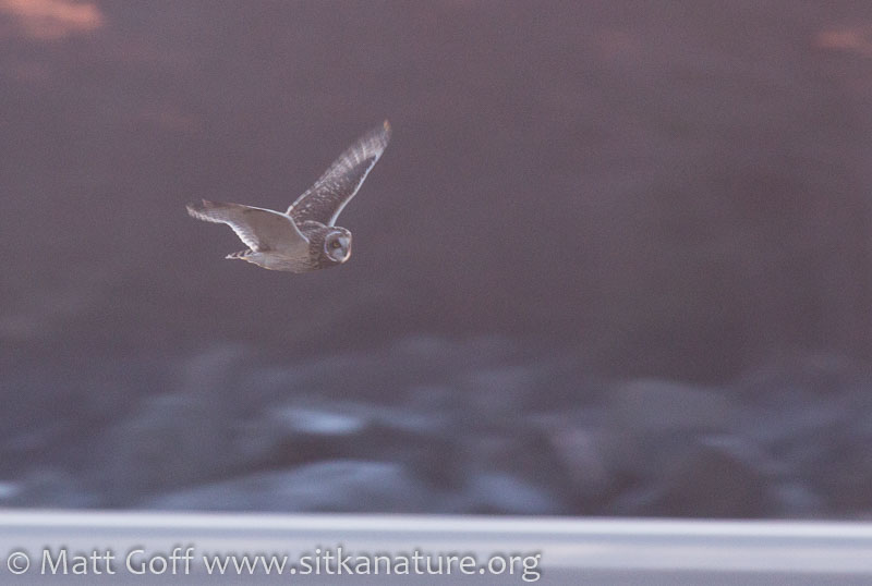 Slide Show Of Some Of My Bird Photos >> Good Birds And A Green Flash Sitka Nature