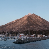 Mt. Verstovia from Crescent Harbor