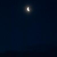 Quarter Moon in Morning Sky