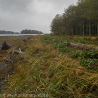Shoreline at Totem Park