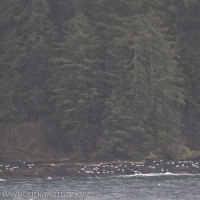 Gulls on Far Shore