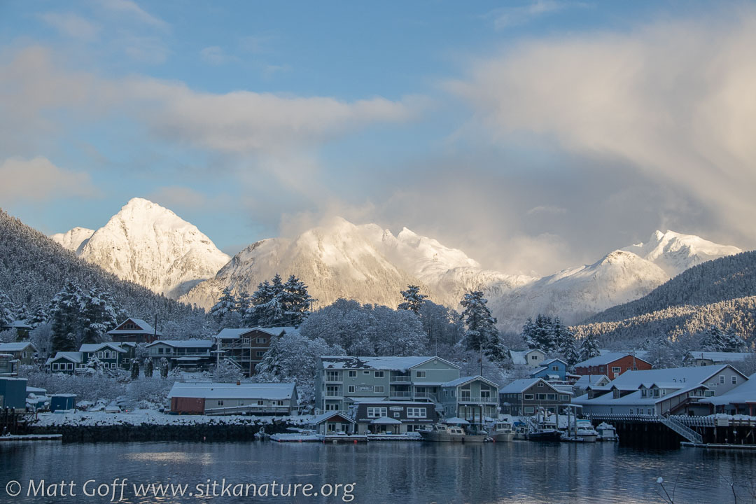 Snow-covered Sitka