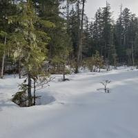 Snowy Muskeg