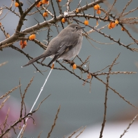 Townsend\'s Solitaire