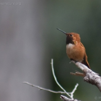 20040413-04-13hummingbird4.jpg