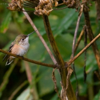 20060814-08-14p07hummingbird.jpg