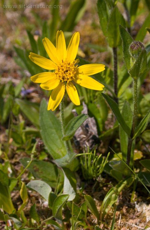 20040623-06-23p08yellowflower.jpg
