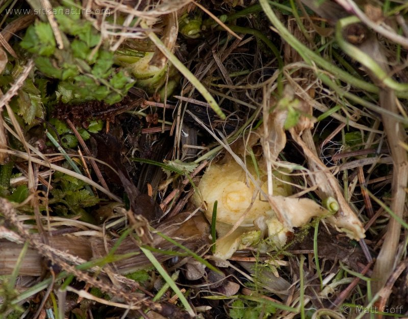 20060402-04-02p01nibbledplant.jpg
