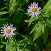 20060916-09-16p11flowers.jpg
