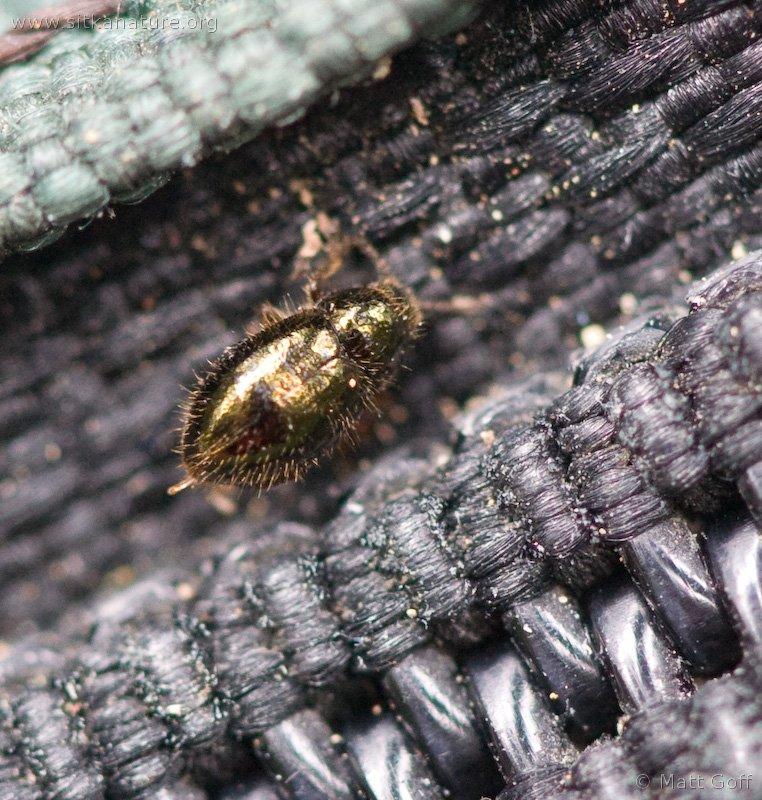 20060702-07-02p05goldbug.jpg