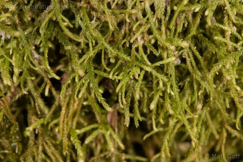 20060320-03-20p02bryophyte.jpg