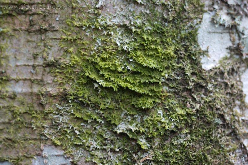 20060410-04-10p07bryophyte.jpg