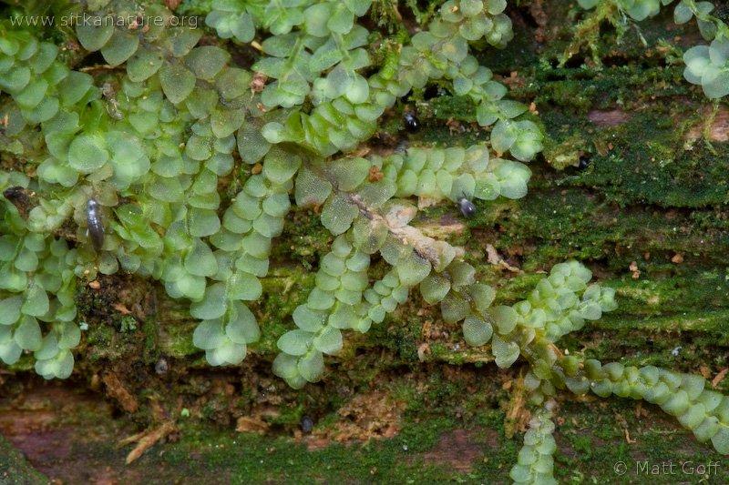 20060616-06-16p03bryophyte.jpg