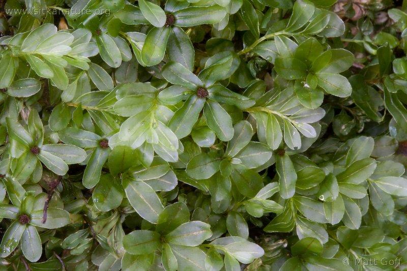 20060616-06-16p15bryophyte.jpg