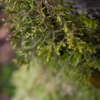 20060406-04-06p04bryophyte.jpg