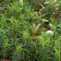 20060616-06-16p07bryophyte.jpg