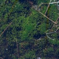 20060702-07-02p16bryophyte.jpg