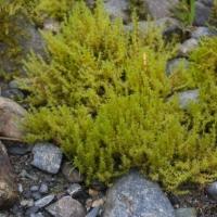 20060806-08-06p04bryophyte.jpg