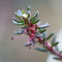 20060519-05-19p03crowberry.jpg