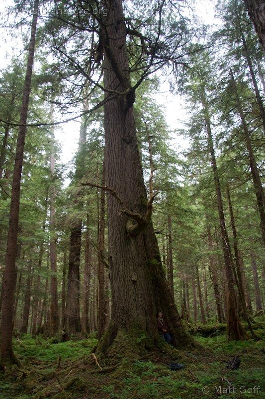 20060702-07-02p03bigtree.jpg