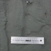 20030517-05-17crowtracks.jpg