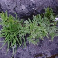 20030501-05-01beachplants.jpg