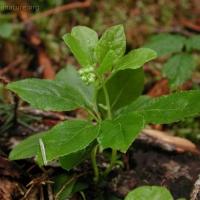 20030613-06-13greenplant.jpg
