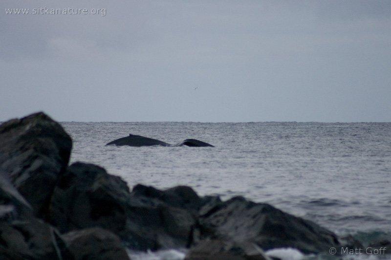 20050402-04-02p02whales.jpg