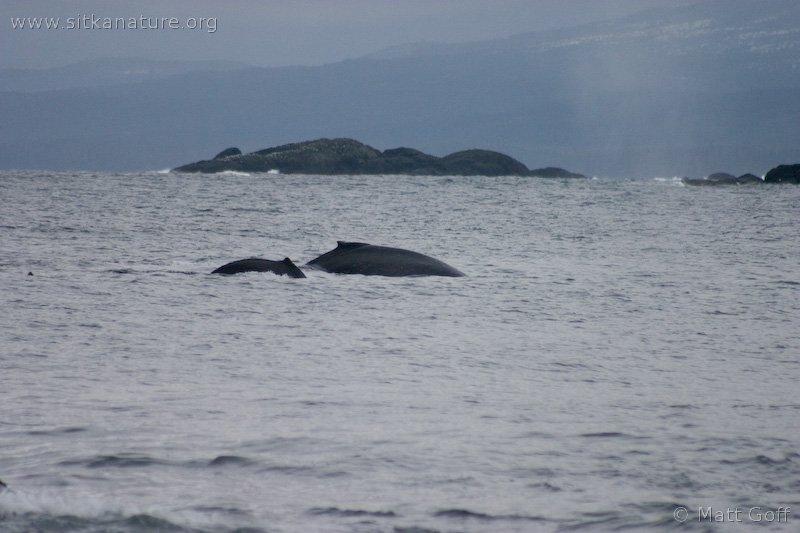20050402-04-02p07whales.jpg