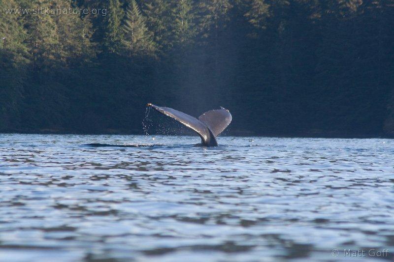 20061027-10-27p10whale.jpg