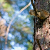 20031028-10-28squirrel.jpg
