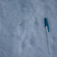 20031127-11-27squirreltracks.jpg