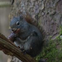 20040506-05-06squirrel.jpg